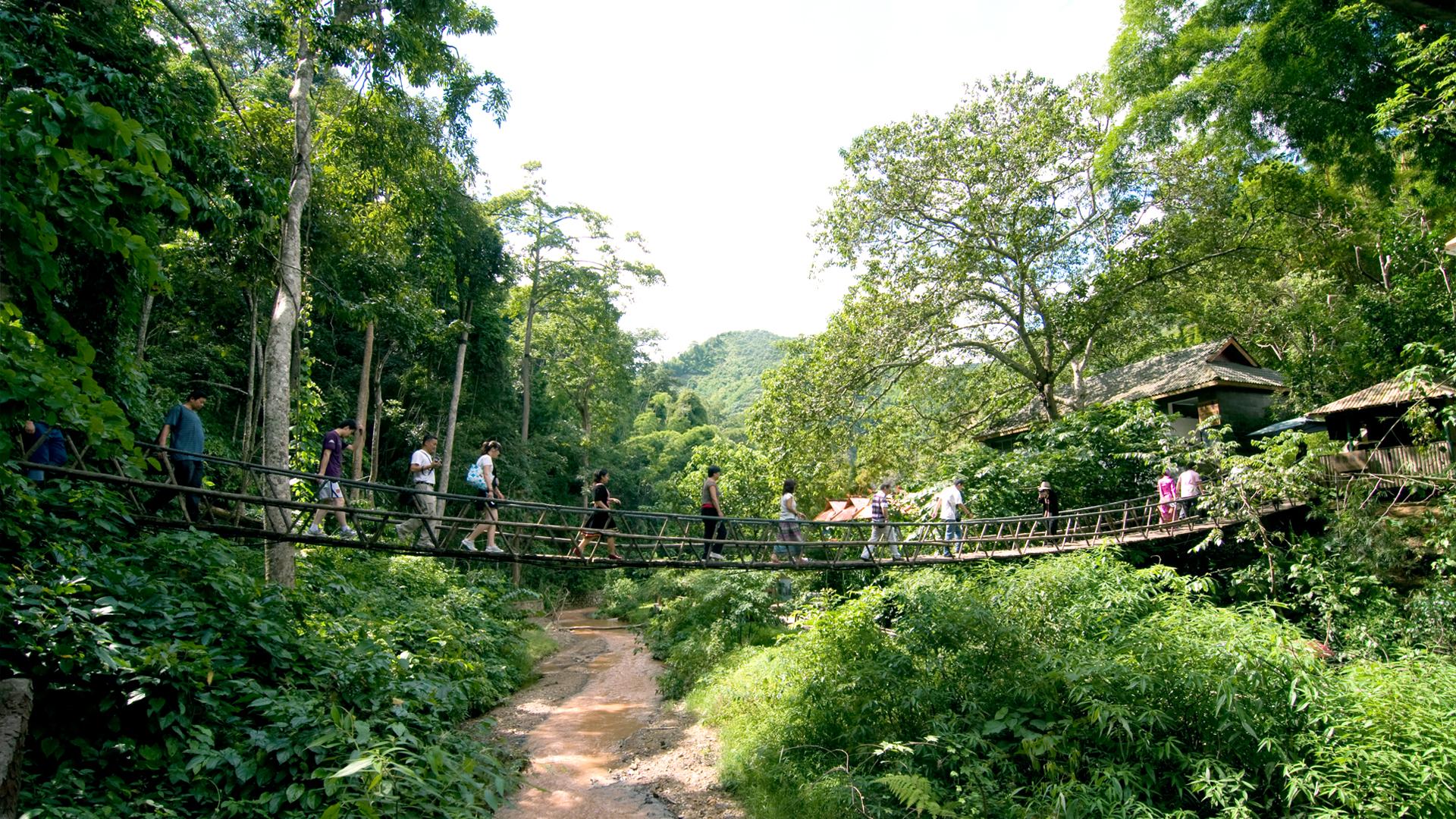 云南旅游景点介绍:西双版纳热带原始森林公园