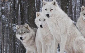狼群商会现定于2018年9月20日狼群企业家商会启动仪式