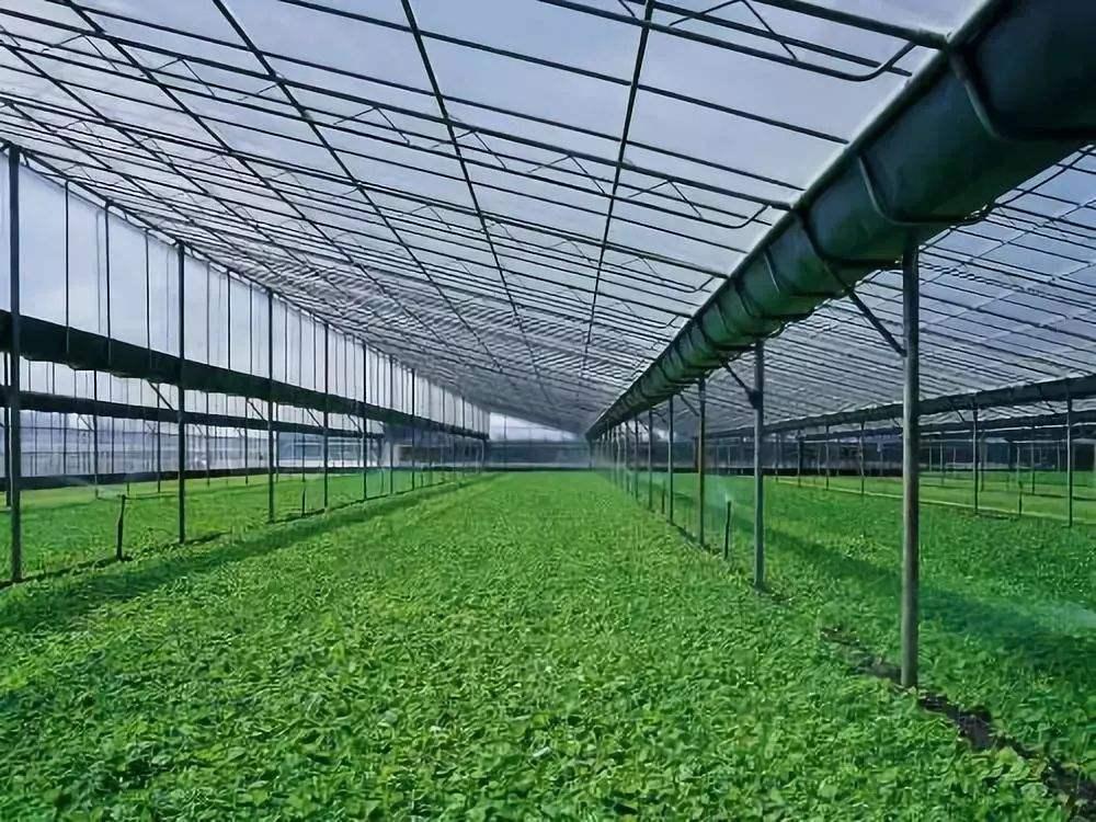 杭州果蔬种植基地